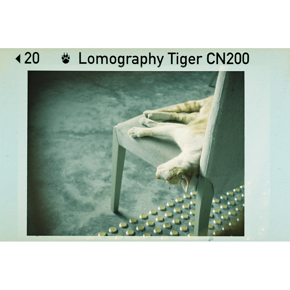 Lomography Color Tiger 200 | 110 kleurenfilm | FotoFilmFabriek