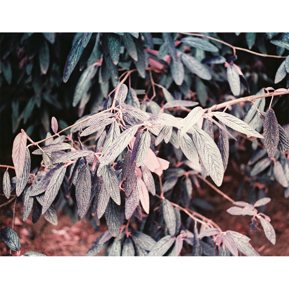 Lomography Lomochrome Purple | Middenformaatfilm