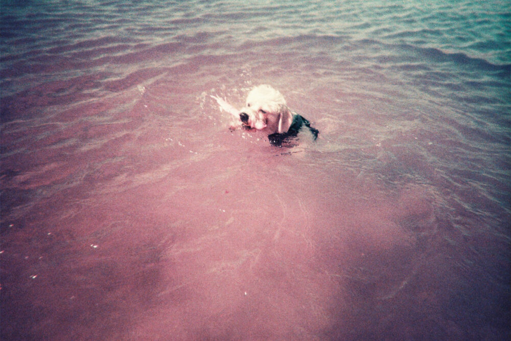 Lomography Simple Use Purple Film Camera + Underwater Case